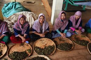 Håndrulling av teblader