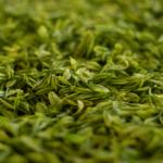 Hva er grønn te?