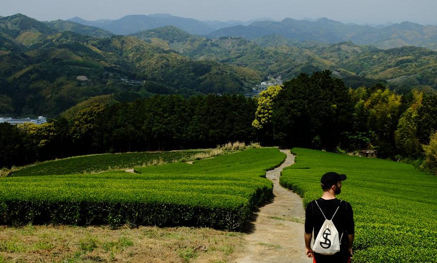Teplanter i Fujieda